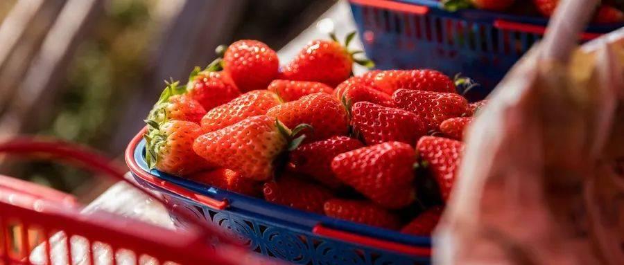 草莓是有价值的好水果吗
