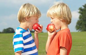 苹果能增孩童的记忆力