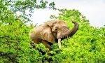 动物拥有神奇的中药本能?
