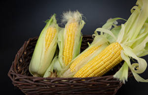 玉米的功效作用与食用禁忌
