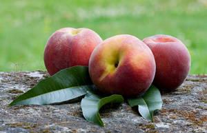 水蜜桃的功效作用及食用禁忌