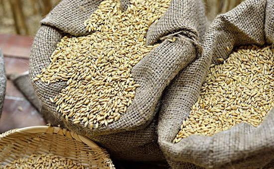 大麦的中医功用营养价值