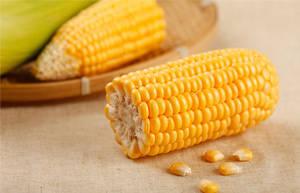 玉米的中医功用营养价值