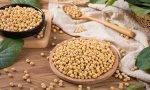 黄豆的营养及功效作用