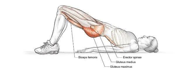 每天100个臀桥运动,1个月拥有一个翘臀!