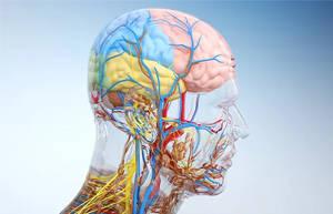 大脑供血不足的表现及预防