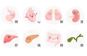 如何养护身体的五脏六腑8大器官