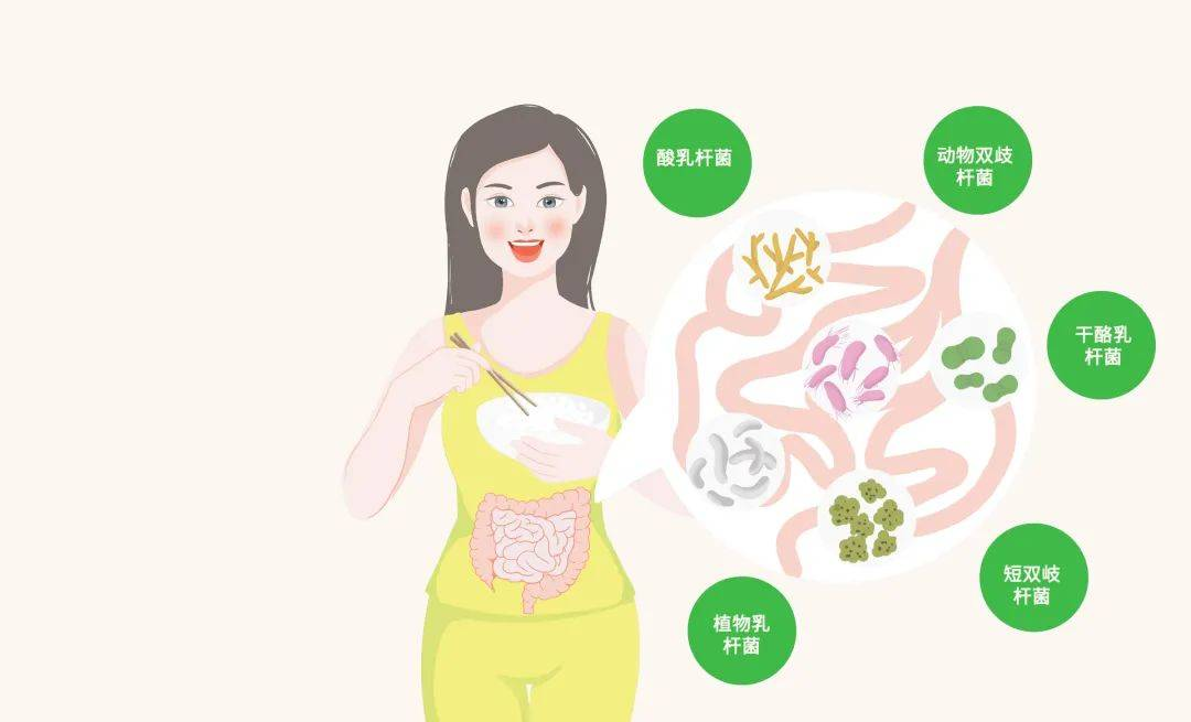 益生菌的功效