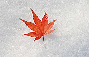 冬季祛寒湿的几个方法