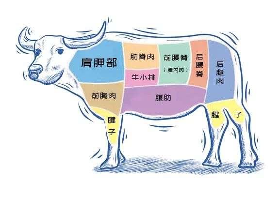 牛的各个部位