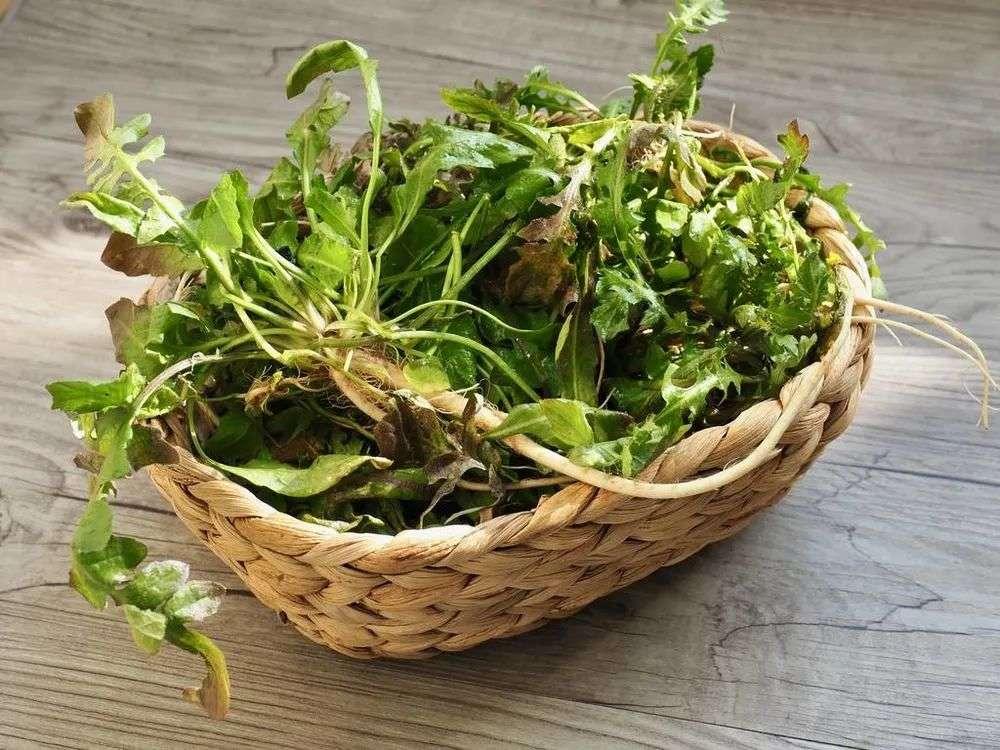 春季第二菜-荠菜