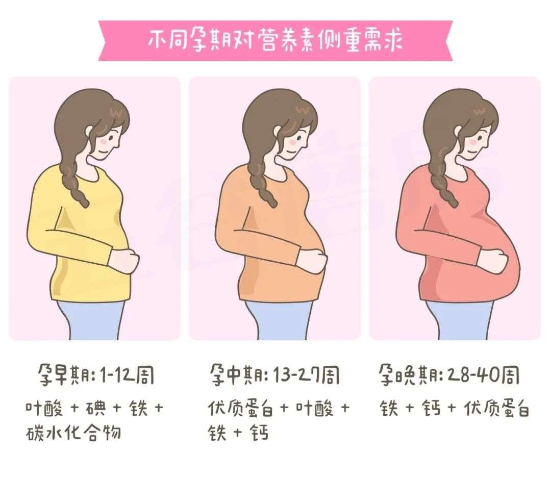 不同孕期对营养的需求