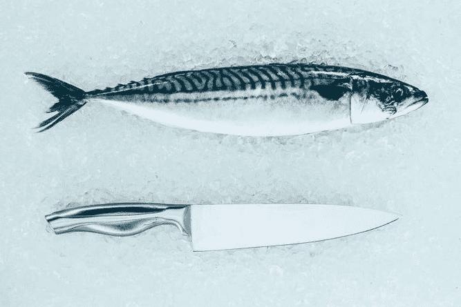 易产生鲭毒素的鱼类