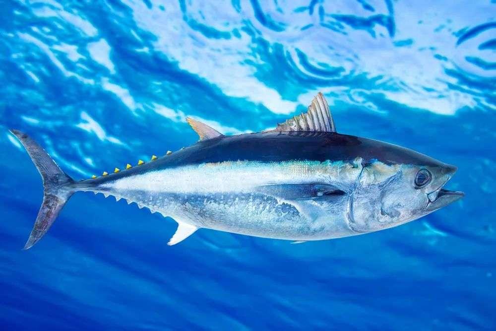 易被环境污染的鱼类