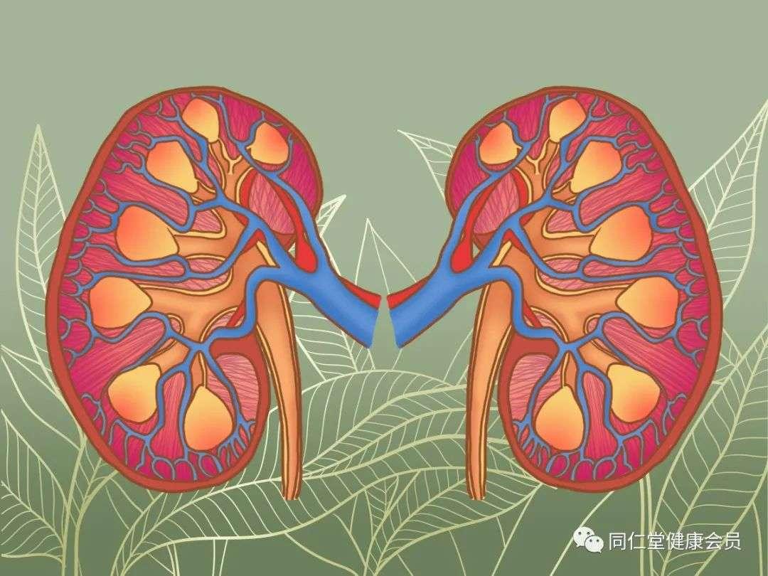 """肾脏出问题的6种表现及4个养肾的""""黄金法则"""""""