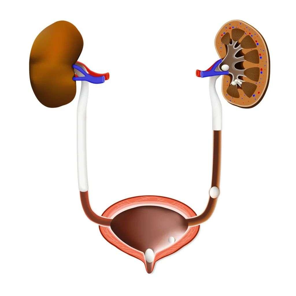如何及时发现肾脏的异常