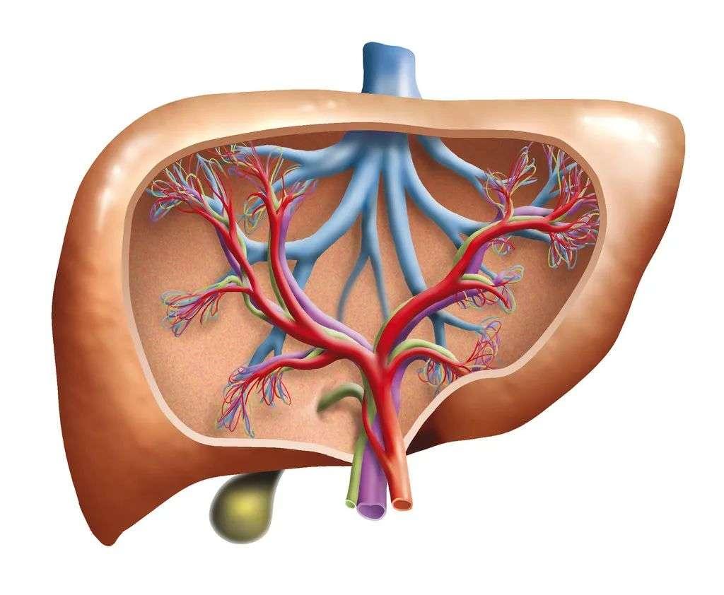 乙肝的症状及检查、治疗